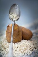 Gastronomie générale/Diététique/ Pommes de terre bio de l'ile de Batz . La pomme de terre primeur est le légume emblématique de l'Ile de batz. Les producteurs ont su préserver les techniques qui en font une spécificité. Les terres sont fertilisées aux algues, un fertilisant naturel, ce qui donne à la pomme de terre un goût et une saveur unique. // General gastronomy / Dietetics / organic potatoes from the island of Batz. The early potato is the emblematic vegetable of the Ile de Batz. The producers have managed to preserve the techniques that make it special. The land is fertilized with algae, a natural fertilizer, which gives the potato a unique taste and flavor.
