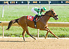 Tripp O Steel winning at Delaware Park on 10/10/12