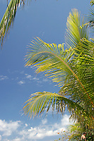 West Bay, Roatan, Honduras. Laying around the beach affords the visitor some blue sky and palm tree fronds.