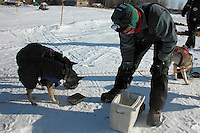 Zack Steer gives his dogs meat and kibble soaked in warm water after arriving at Nikolai. Photo by Jon Little.
