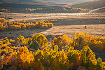 Fall colors in the northern Sierra Nevada, Conway Summit, Mono County, Calif.