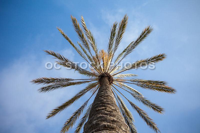 Palm Tree California Landscape