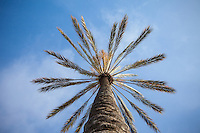 Palm Tree California Landscape