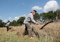 Leusden -  De Stichting Behoud Oude Werktuigen organiseert de jaarlijkse Oogstdag op landgoed Den Treek. Maaien van rogge met een zicht