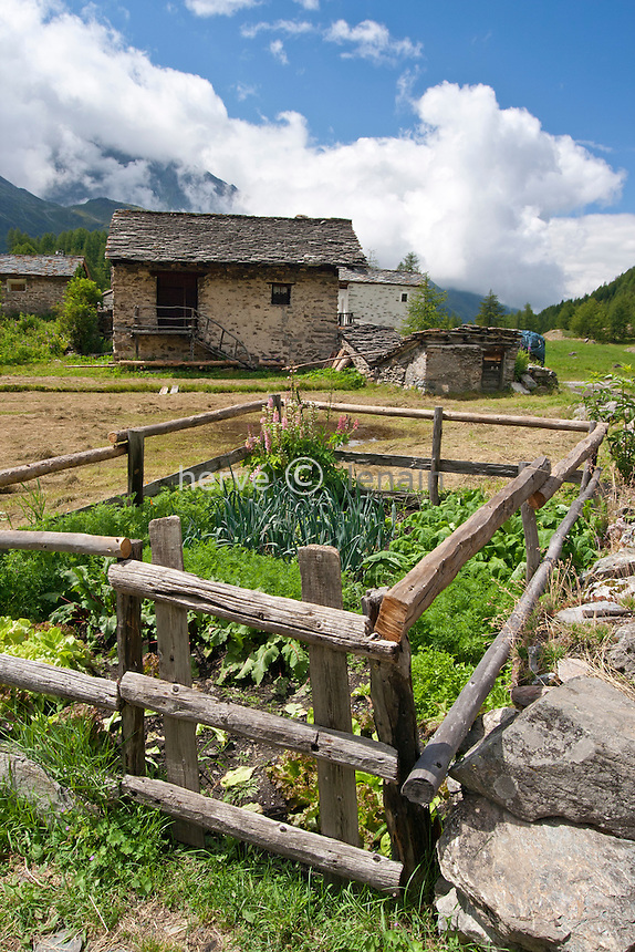 France, Rhône-Alpes, Savoie (73), la Tarentaise, Sainte-Foy-Tarentaise, Le Monal : potager de montagne // France, Rhone-Alpes, Savoie, Tarentaise, Sainte-Foy-Tarentaise, Le Monal: kitchen garden in the mountain.