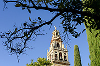 SPAIN, Cordoba, Mezquita, mosque and cathedral, bell tower and orange tree