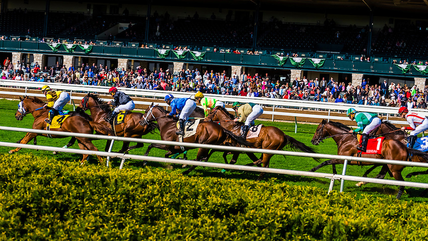 Horse racing on the turf track at Keeneland  Racecourse, Lexington, Kentucky USA.