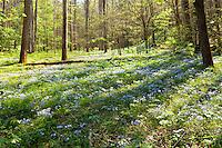 Spring Forest, Whiteoak Sink