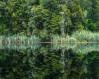 Rainforest reflections in Lake Mathseon, Westland Tai Poutini National Park, UNESCO World Heritage Area, West Coast, New Zealand, NZ