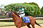 HOT SPRINGS, AR - APRIL 14: Oaklawn Handicap. Oaklawn Park on April 14, 2018 in Hot Springs,Arkansas. #10 Accelerate with jockey Victor Espinoza (Photo by Ted McClenning/Eclipse Sportswire/Getty Images)