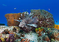 Caribbean coral reef photos