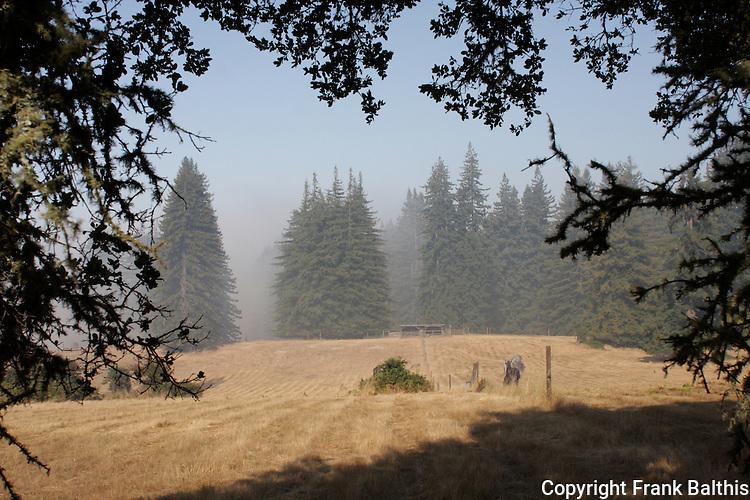Meadow in Bonny Doon