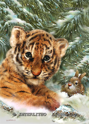 GIORDANO, CHRISTMAS ANIMALS, WEIHNACHTEN TIERE, NAVIDAD ANIMALES, paintings+++++,USGI2629,#XA# tigers
