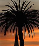 The skies turn a burnt orange just before sunrise in the Presido near Crissy field..