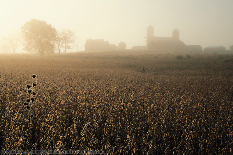Soybean Farm, Juda, Wisconsin.,