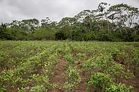 A coca plot in Entre Rios, Chapare province, Bolivia. November 28, 2019.<br /> Une parcelle de coca à Entre Rios, province du Chapare, Bolivie. 28 novembre 2019.