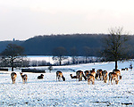 animals in the snow photos by ZSL Whipsnade Zoo
