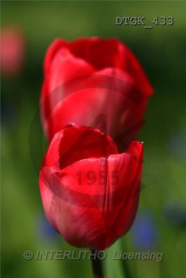 Gisela, FLOWERS, photos(DTGK433,#F#) Blumen, flores, retrato