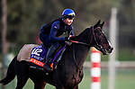 OCT 29: Breeders' Cup Filly & Mare Turf entrant Villa Marina, trained by Carlos Laffon-Parias, gallops at Santa Anita Park in Arcadia, California on Oct 29, 2019. Evers/Eclipse Sportswire/Breeders' Cup