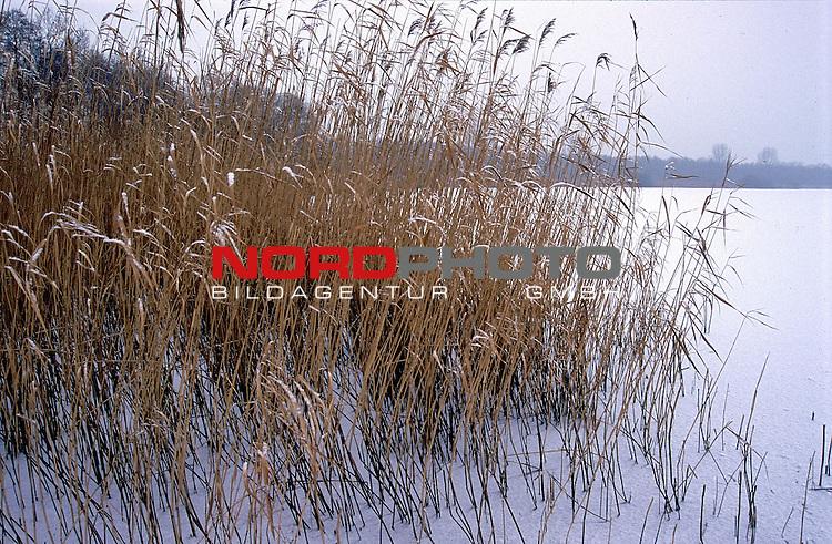 Reet am winterlichen Ufer<br /> Foto &copy; nordphoto / Willi Rolfes<br /> <br /> <br /> <br />  *** Local Caption *** Bildinfo: 20 * 30 bei 300 DPI<br /> Foto ist honorarpflichtig! zzgl. gesetzl. MwSt.<br />  Belegexemplar erforderlich<br /> Adresse: nordphoto<br /> Georg-Reinke-Strasse 1<br /> 49377 Vechta