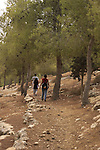 Israel, Southern Hebron Mountain, hiking in Yatir forest