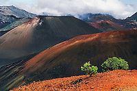 The hardy Kupaoa plants stand out amongst the cinder cones in the crater of HALEAKALA NATIONAL PARK on Maui in Hawaii