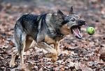 2009; Utrecht; Dog chases ball.