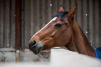 FAO Laura Lean.<br /> Friday 20 January 2017<br /> Pictured: One of the stables' horses<br /> Re: Sue Scourfield's riding school is  being hit by increasing business rates.