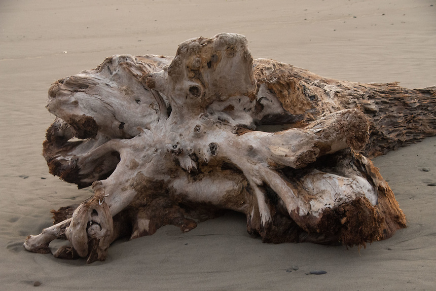 Driftwood, Kalaloch, Olympic Peninsula, Washington, US
