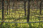 Shenandoah Valley vineyards, winter...Cooper Vineyards.