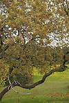 Israel, Sharon region, Park Hasharon Nature Reserve