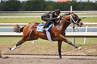 #155Fasig-Tipton Florida Sale,Under Tack Show. Palm Meadows Florida 03-23-2012 Arron Haggart/Eclipse Sportswire.