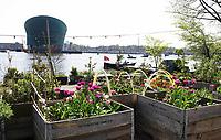 Nederland Amsterdam april 2018 . Shaffy's Tuin aan het Oosterdok. De Tuin is geïnspireerd op de vrijgevochten zanger Ramses Shaffy die in de jaren zeventig op een boot op de Dijksgracht woonde. Het is een bloemen/groentetuin voor de buurtbewoners. Foto Berlinda van Dam / Hollandse Hoogte