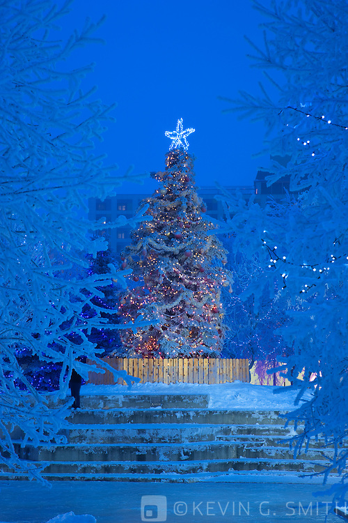 Photo of the Christmas tree at Anchorage's Town Square at twilight, branches covered in hoarfrost, winter, Southcentral Alaska, USA.