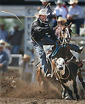Tie-down roper Trevor Brazile of Decatur, TX lands his rope on a calf during slack Wednesday morning at Frontier Park. Canton recorded a time of 12.6. Michael Smith/Staff..