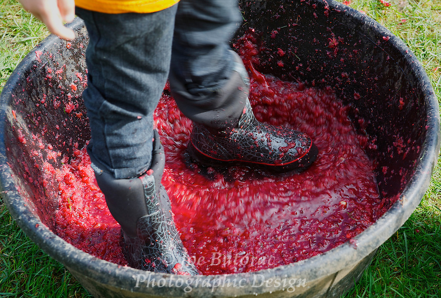 Cranberry Crushing Fort Langley Cranberry Festival, Fort Langley B.C.