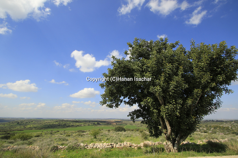 Israel, Shephelah, Beth Guvrin national park, a view from Tel Maresha