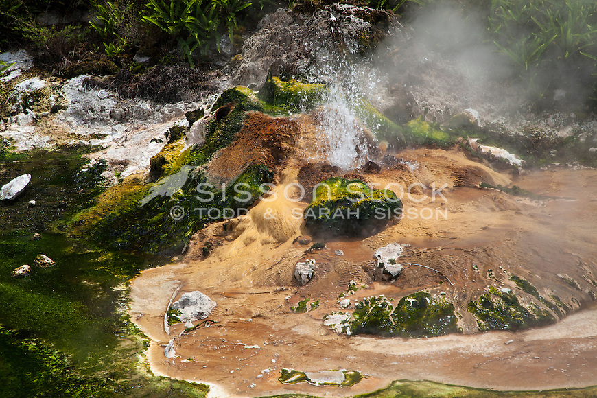 Birds Nest Terrace, Waimungu Volcanic Valley, Rotorua, New Zealand- stock photo, canvas, fine art print