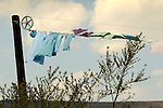 Clothesline on Amish farm in breeze.