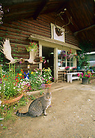 Log cabin gift shop, Native village, Eagle, Alaska