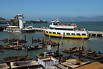Blue and Gold Fleet at Pier 39 with CA sea lions