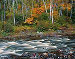 Superior National Forest, MN<br /> Riffles and rocks in the Temperance River with fall colors in birch, hardwood forest