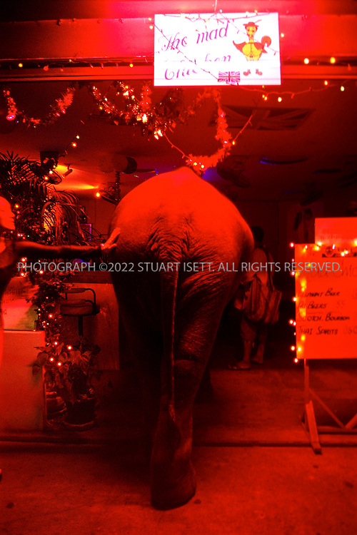 3/15/2000--Bangkok, Thailand..Ploy sticks her head inside a brothel seeking donations from tourists and prostitutes (NOTE: ELEPHANT BEER SIGN ON LEFT)..Photograph by Stuart Isett.©2003 Stuart Isett All rights reserved