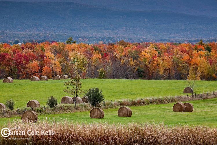 Fall foliage and hay bales in the Champlain Valley, Whiting, VT, USA