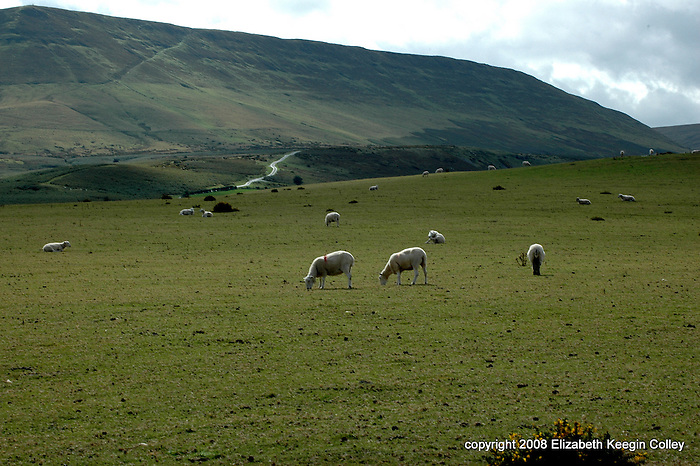 Hay Bluff from the Common where sheep graze