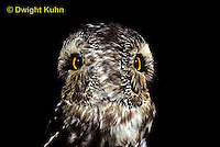 OW12-002z  Saw-whet owl - double exposure showing ability to turn head - Aegolius acadicus