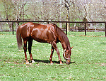 Crimson Satan won the Garden State Stakes, Pimlico Futurity, Mass Cap, Michigan Mile, Washington Park H., San Fernando S. and Strub Stakes.  He was champion 2-year-old, and a big fan favorite due to his competitive spirit.