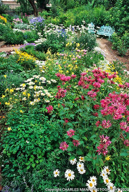 El Zaguan is one of the oldest buildings on Canyon Road which is one of the oldest streets in Santa Fe. It has a garden that is said to have been designed by frontier naturalist Adolf Bandelier. Red Monarda and blue chiairs anchor a perennial bed at the garden.