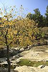 Israel, Upper Galilee, Ein Nevoraya in Biria forest