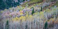 Taken on the Alpine Loop on Route 92 outside of Sundance, Utah.